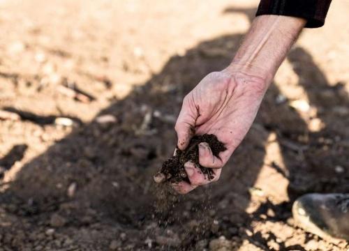 Гибнет на корню. В Пластовском районе могут объявить режим чрезвычайной ситуации по засухе
