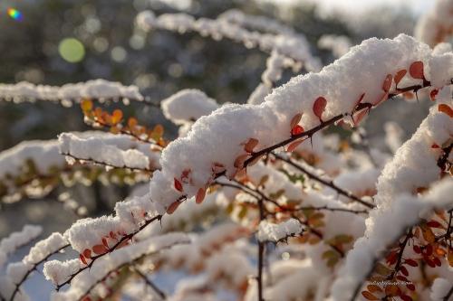 И зима катит в глаза? Синоптики обещают южноуральцам первый снег